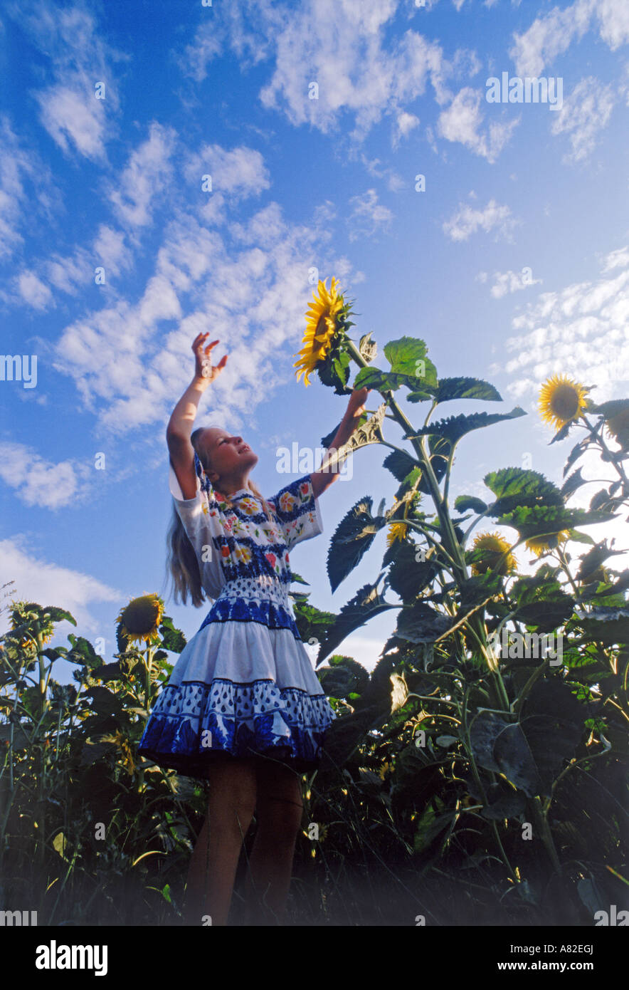 Girl reaching up for sunflower under blue skies in Provence - Stock Image