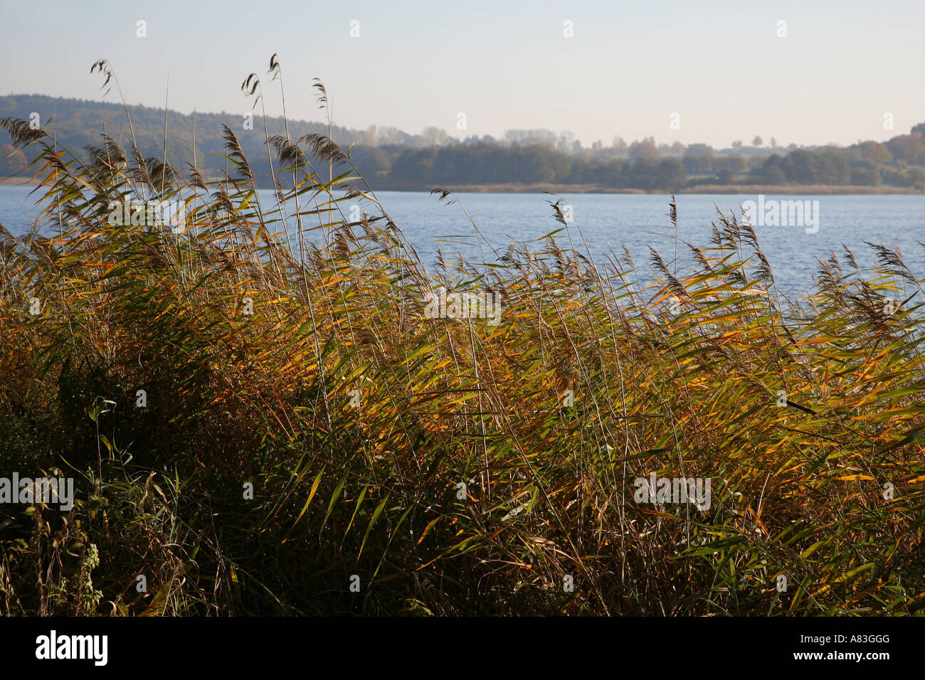 The Segeberger lake in Schleswig-Holstein, Germany - Stock Image