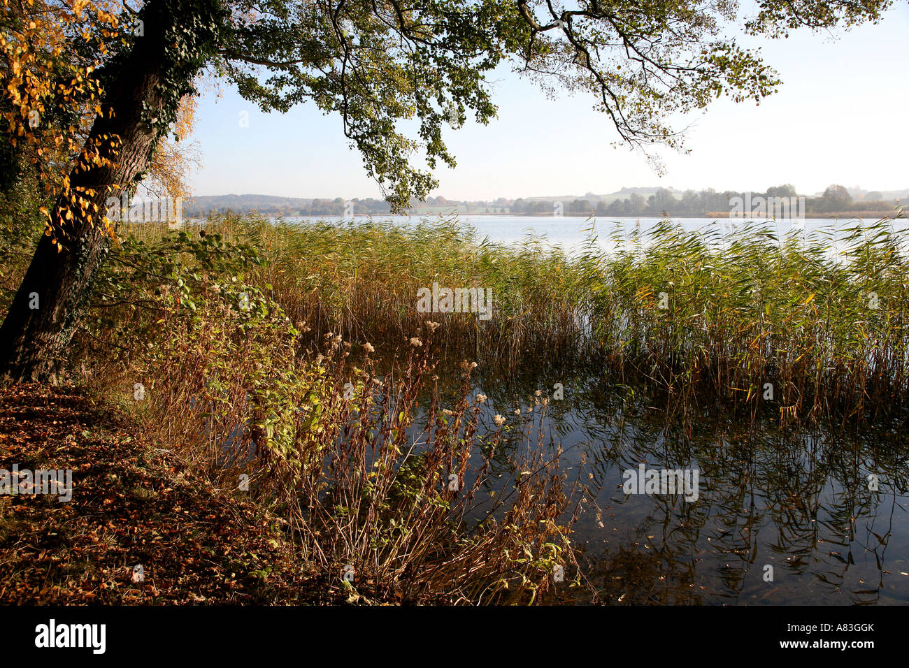 The Segeberger lake in Schleswig-Holstein the nothernmost federal state of Germany - Stock Image