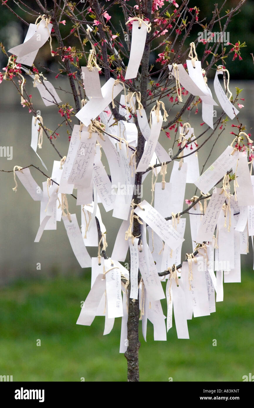 Well wishes for american soldiers written on pieces of paper hang from a cherry tree in Washington D C - Stock Image