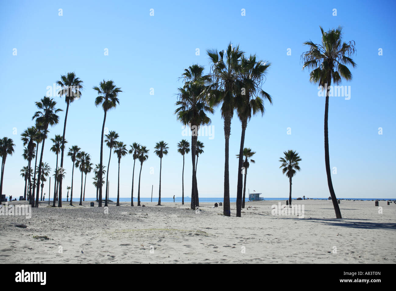 Palm Trees At Venice Beach California Usa