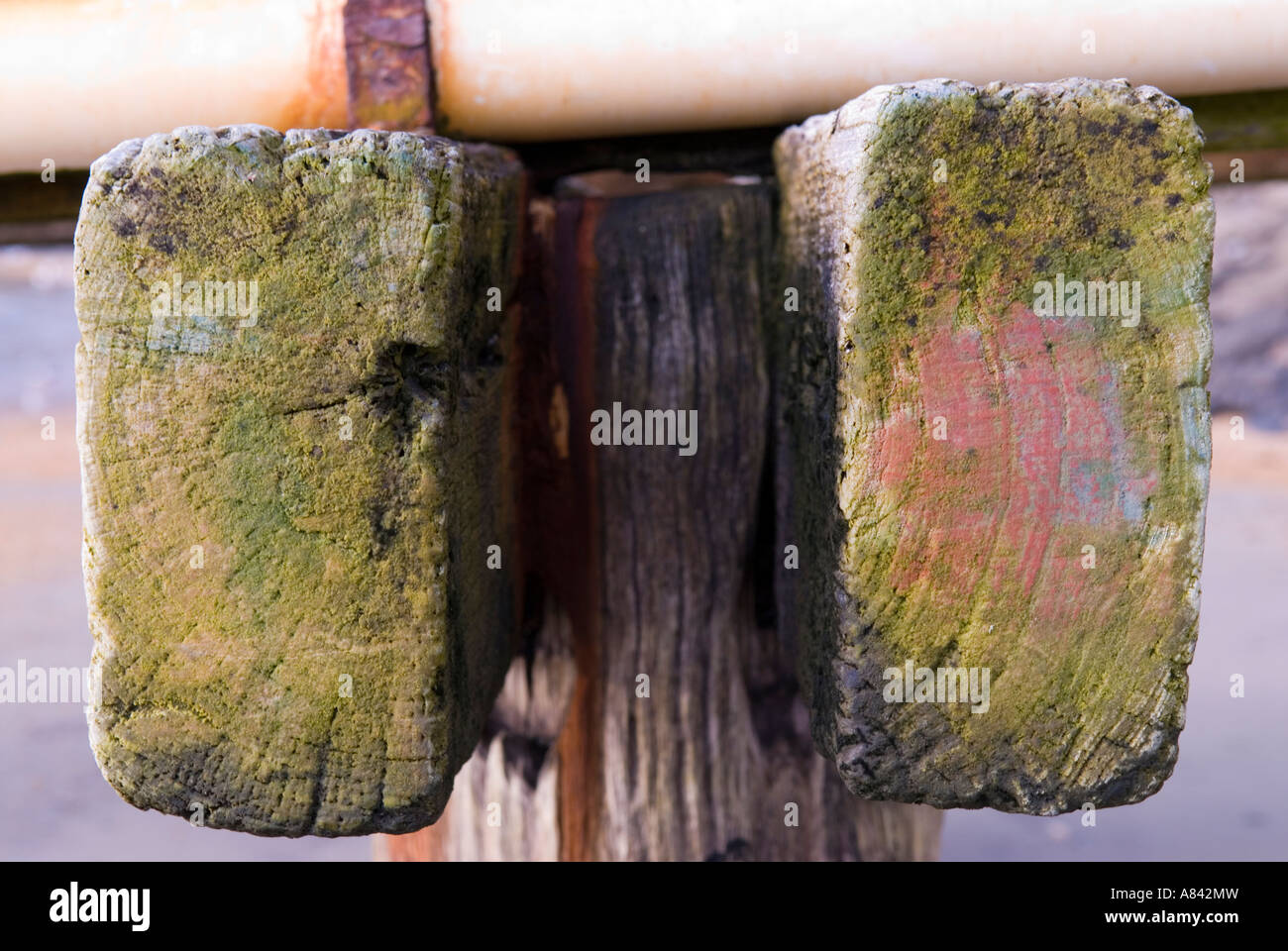 Green mould on seaside jetty timbers - Stock Image