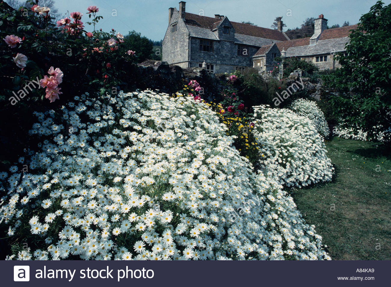 Glorious gardens at Motiscombe House opened weekly to the public by the National Trust, UK - Stock Image