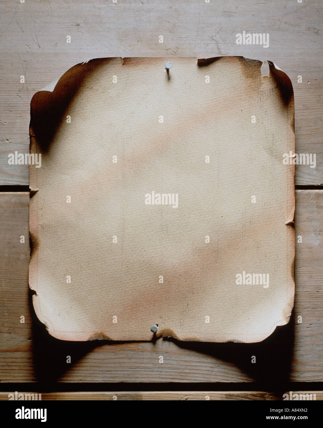 Still life image of blank parchment pinned to a wall - Stock Image