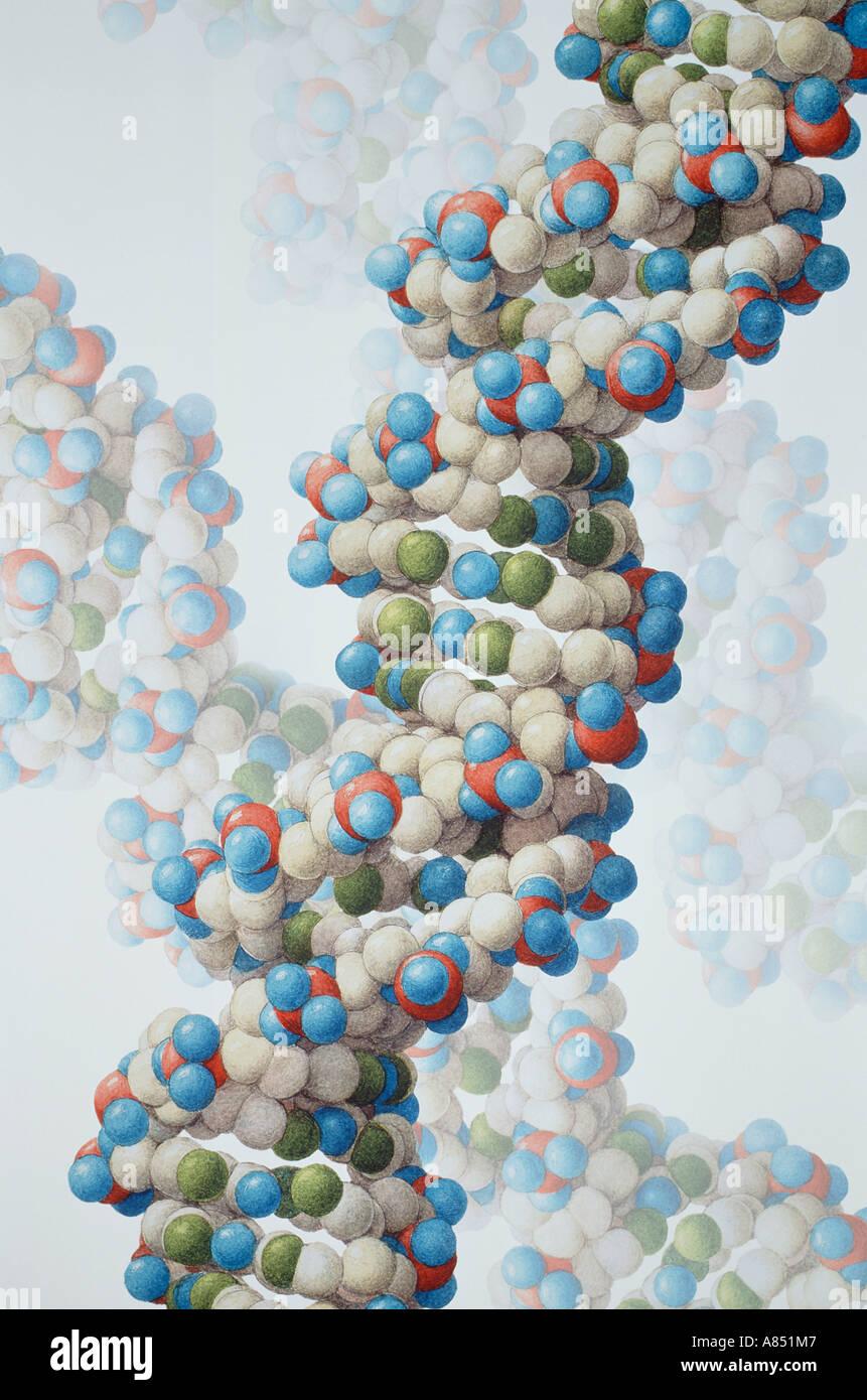Human Genetics. Nucleic Acids. DNA Molecule Illustration. - Stock Image