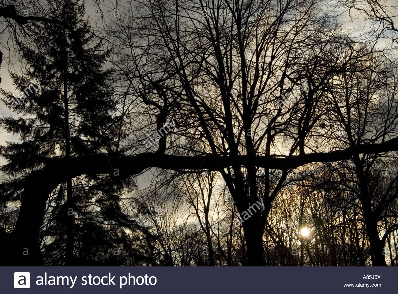 Tree Branches against a winter sky in Michigan - Stock Image