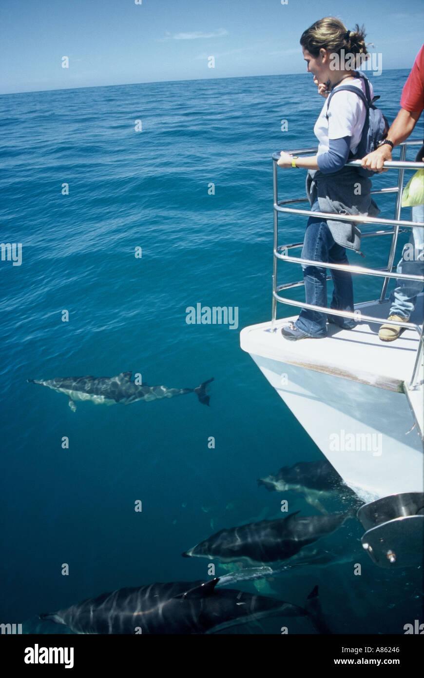 Dolphin Watching Kaikoura New Zealand - Stock Image