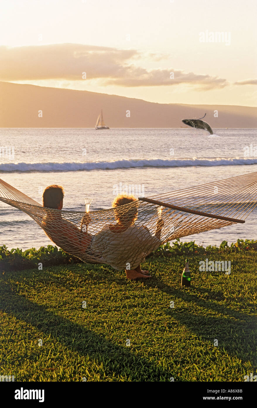 Couple sitting in hammock with sunset drinks watching breaching humpback whale off Island of Maui - Stock Image