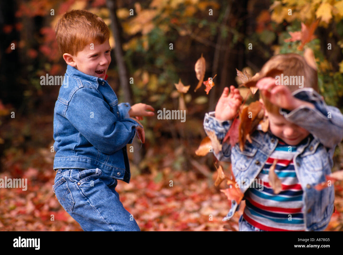 Young brothers exchange a playful toss of autumn leaves October in Blendon Woods Metro Park Columbus Ohio model released - Stock Image