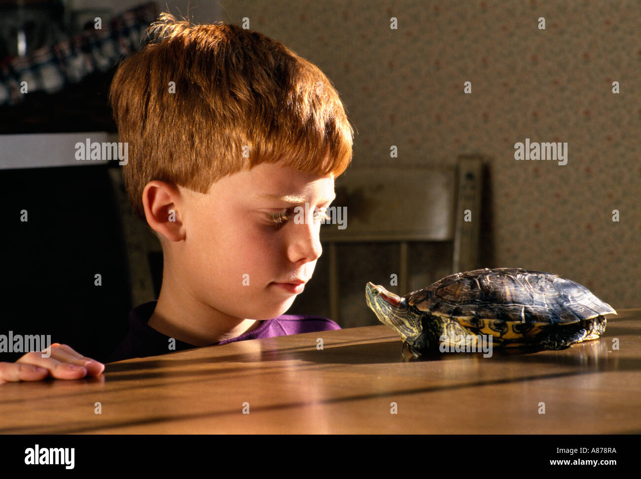 Young boy watching his pet turtle at home - Stock Image