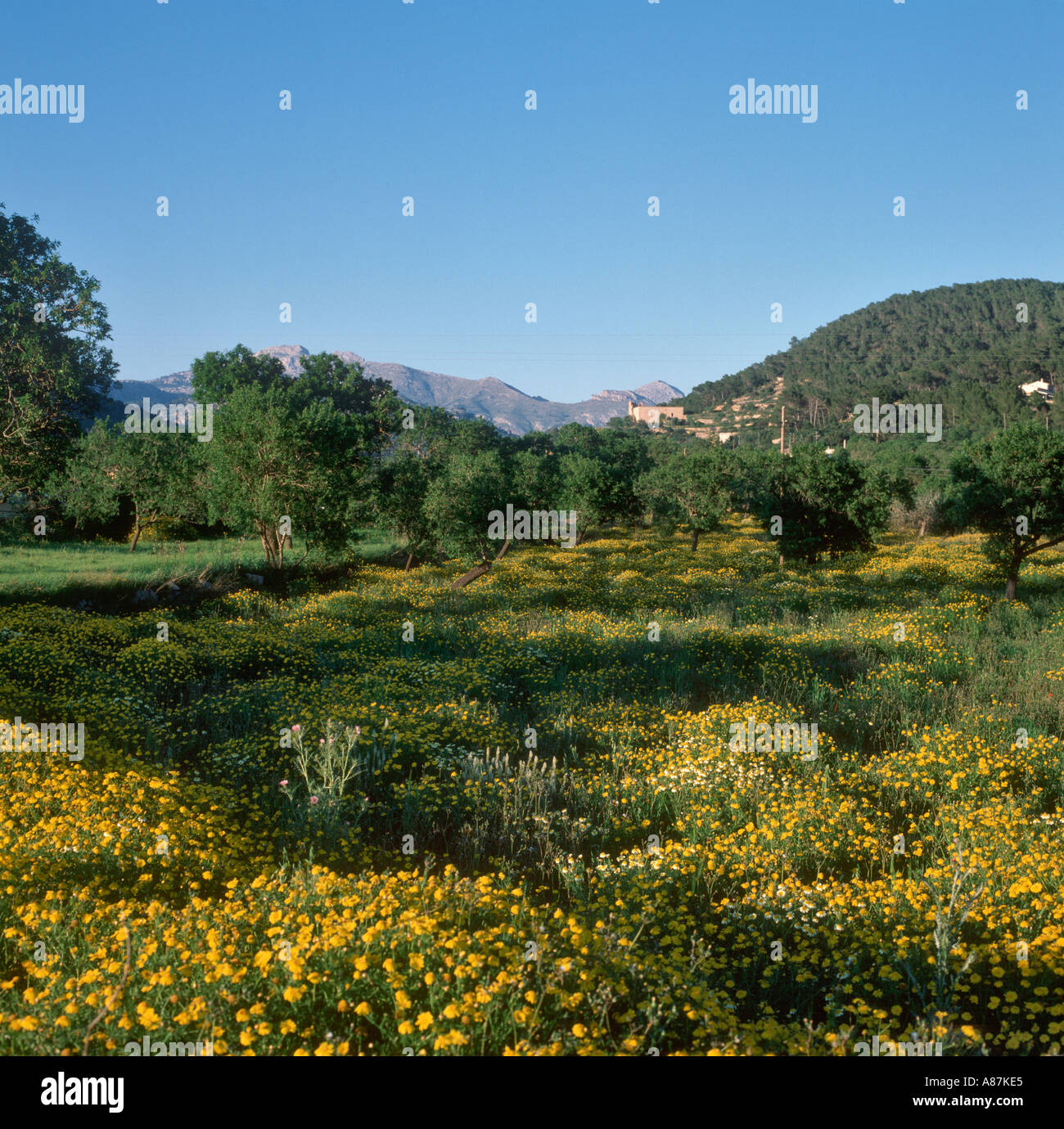 Countryside in the south west of the island of Mallorca, Balearic Islands, Spain - Stock Image