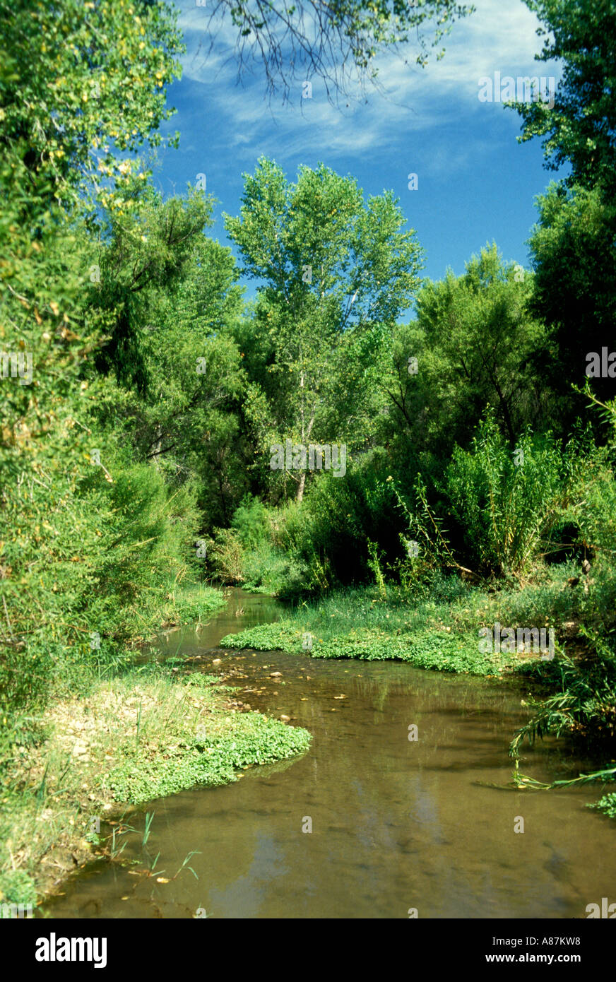San Pedro River Cochise Co Arizona USA Typical riparian habitat used for nesting by Green Kingfishers and Yellow billed Cuckoos - Stock Image
