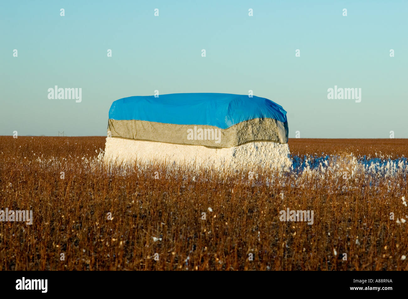 Bale of Cotton in a Field in Grandfield, Oklahoma - Stock Image