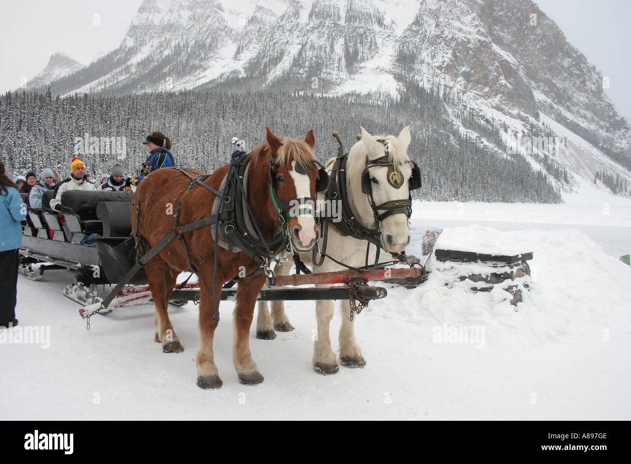 Winter scene with horse drawn sleigh at Fairmont Chateau Lake Louise in Banff National Park Alberta Canada Stock Photo