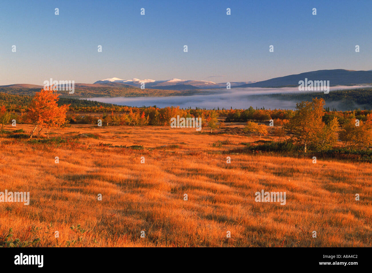 Autumn colors in mountains of Harjedalen in Northern Sweden at sunrise - Stock Image