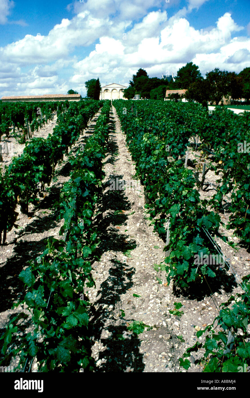 France Bordeaux Vines and museum at Chateau Mouton Rothschild - Stock Image
