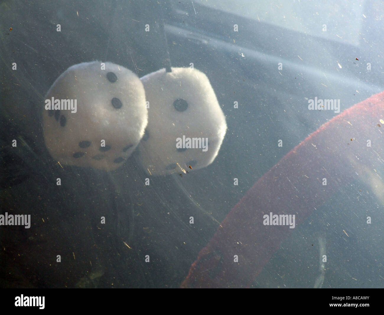 fluffy dice in car window - Stock Image