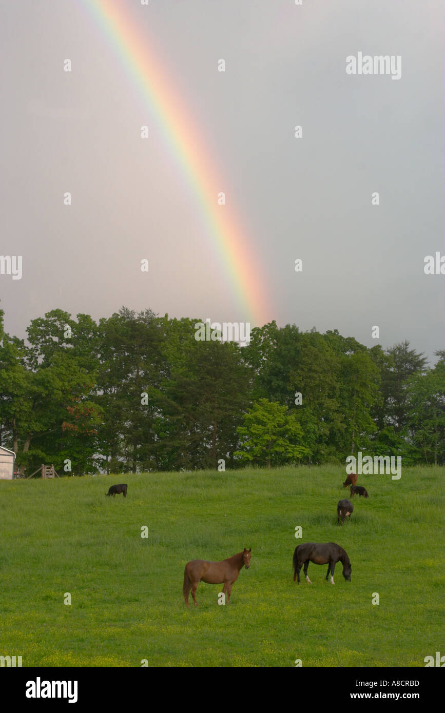 After the storm a rain bow over pasture land in Tennessee - Stock Image