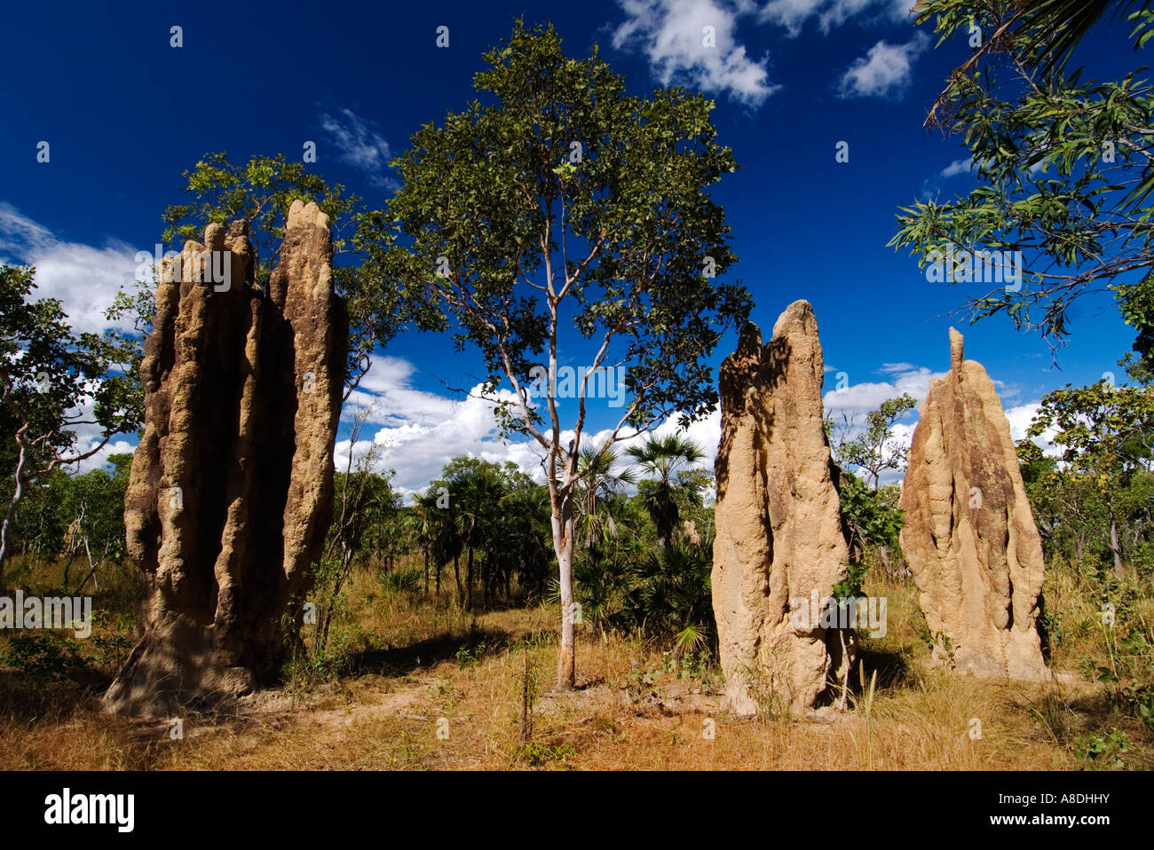 Termite hills in Litchfield National Park in Northern Territories near Darwin Australia 2007 - Stock Image