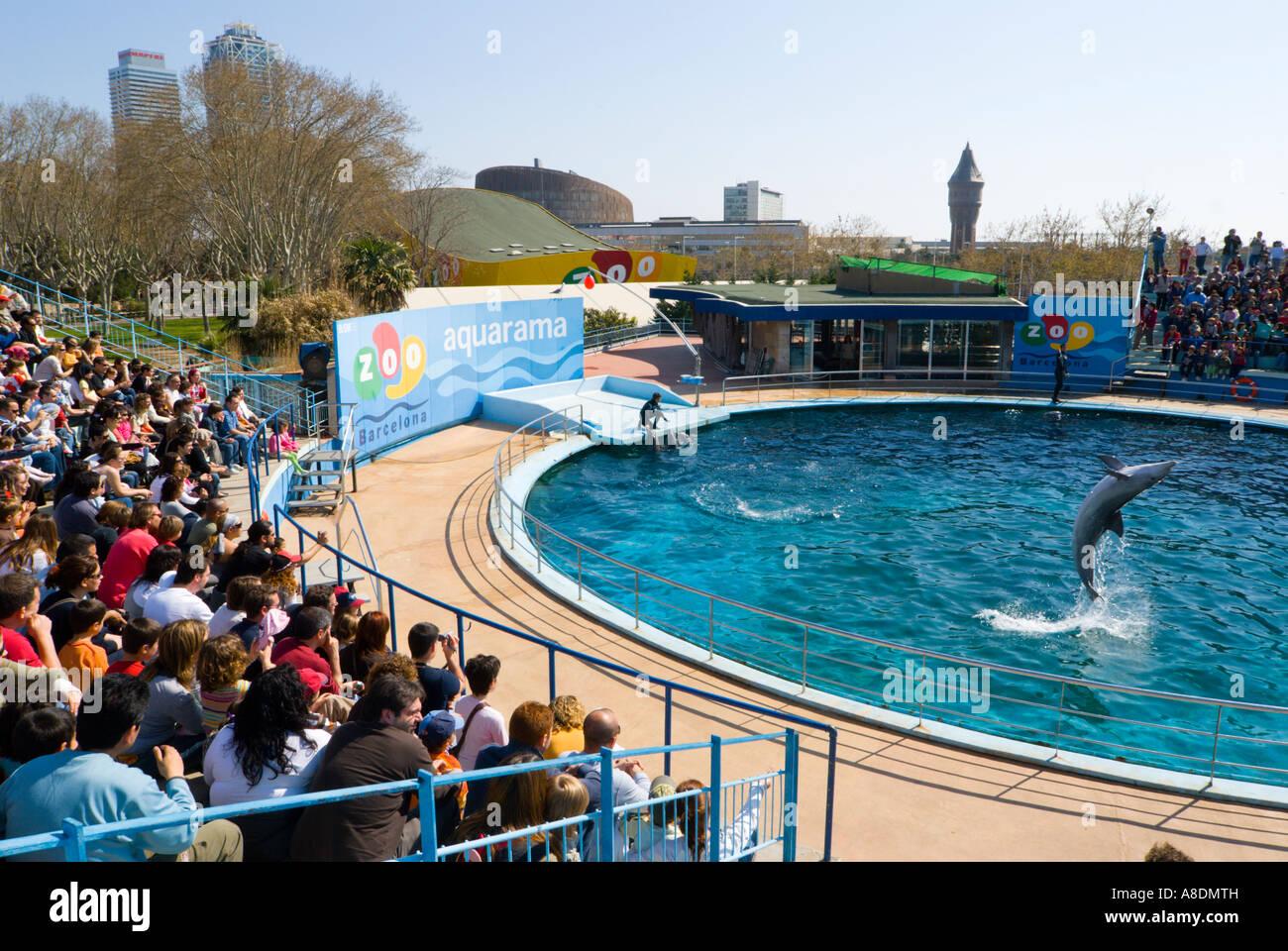 Barcelona Zoo Aquarama Dolphin Show Stock Photo 12071200 Alamy