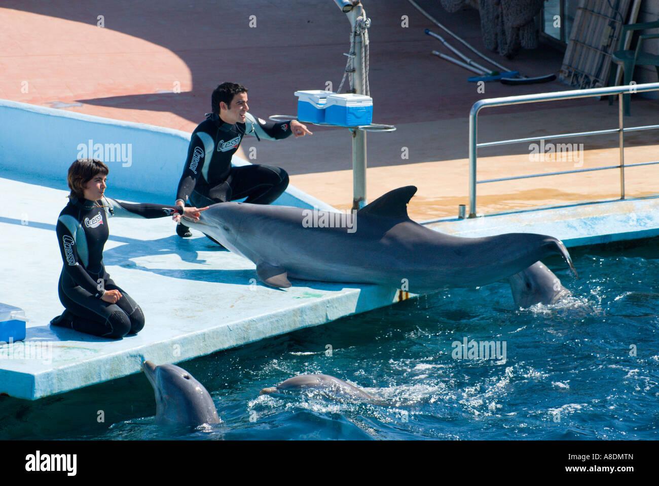 Barcelona Zoo Aquarama Dolphin Show Stock Photo 12071204 Alamy