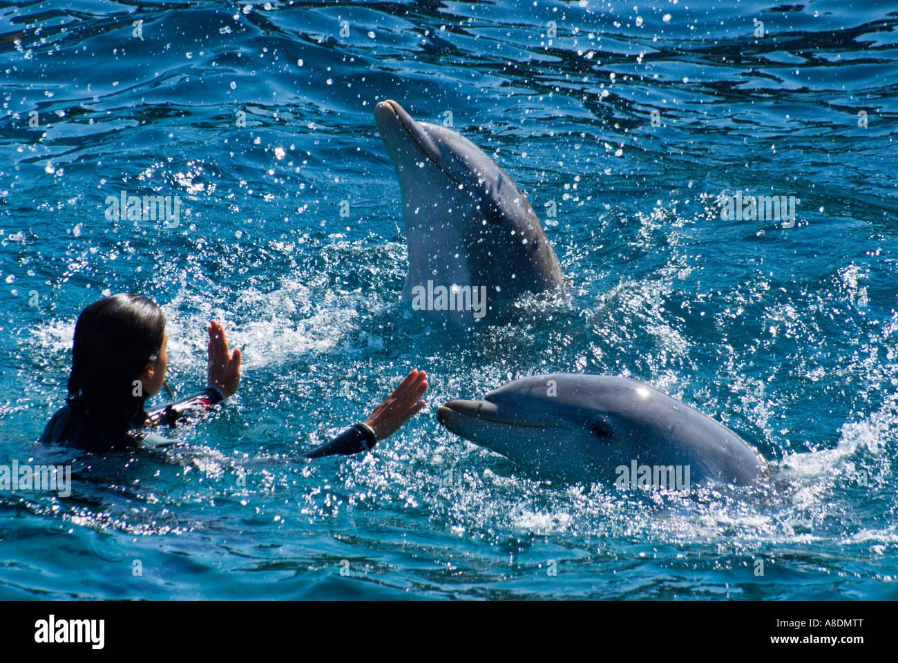 Barcelona Zoo Aquarama Dolphin Show Stock Photos Barcelona Zoo