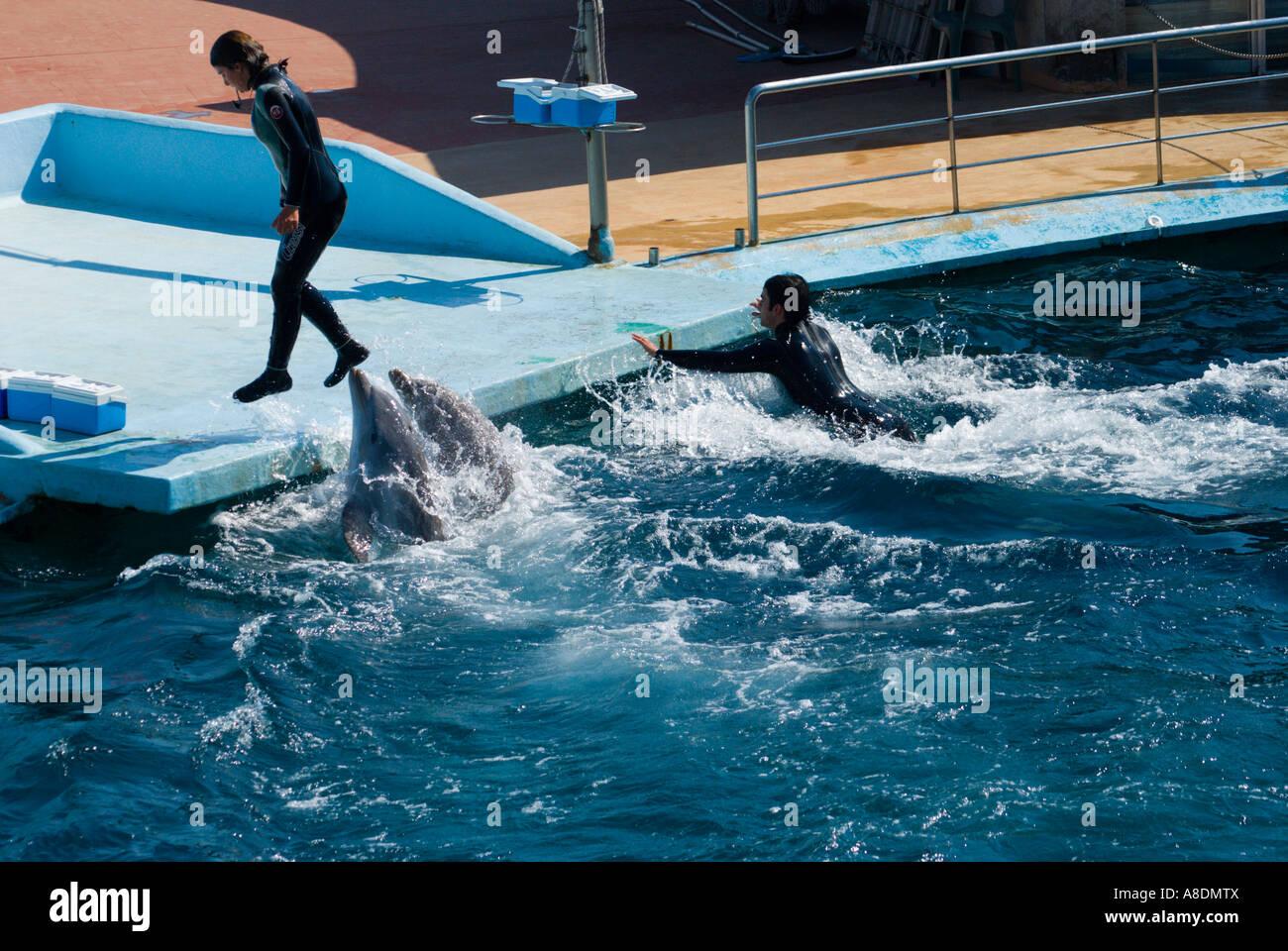 Barcelona Zoo Aquarama Dolphin Show Stock Photo 12071209 Alamy