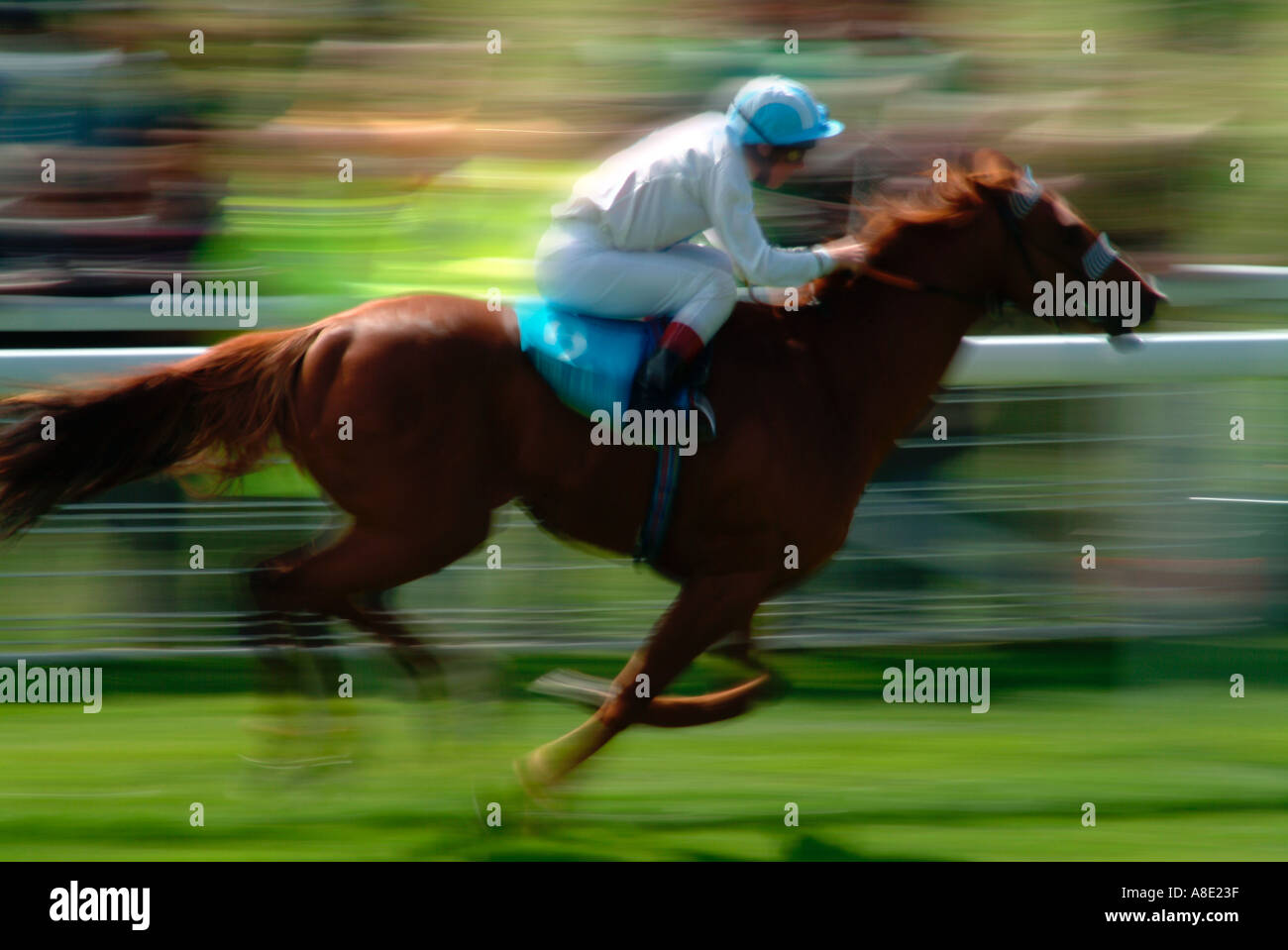 Horse racing at Chester Races Cheshire England UK - Stock Image