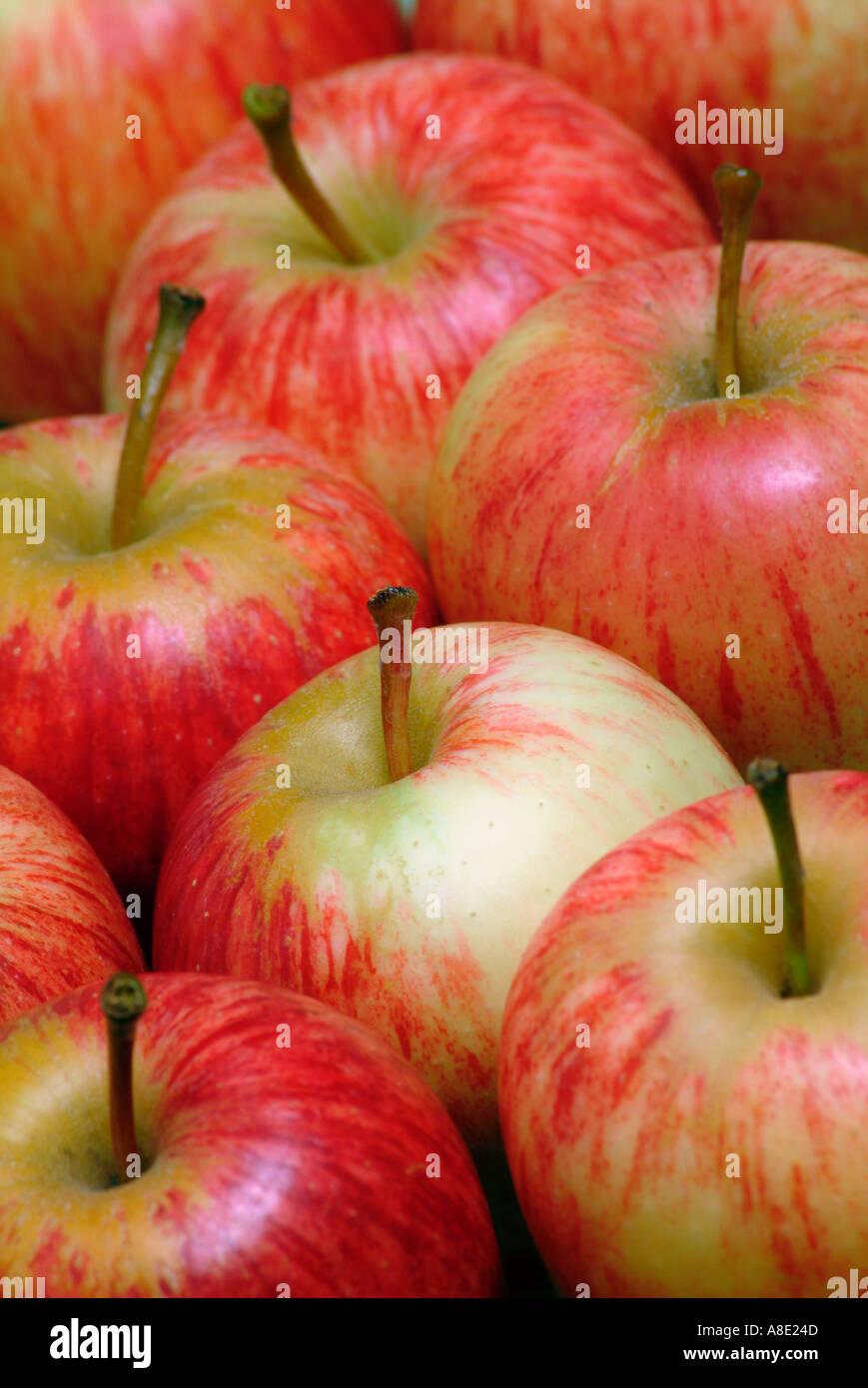 Royal Gala apples - Stock Image