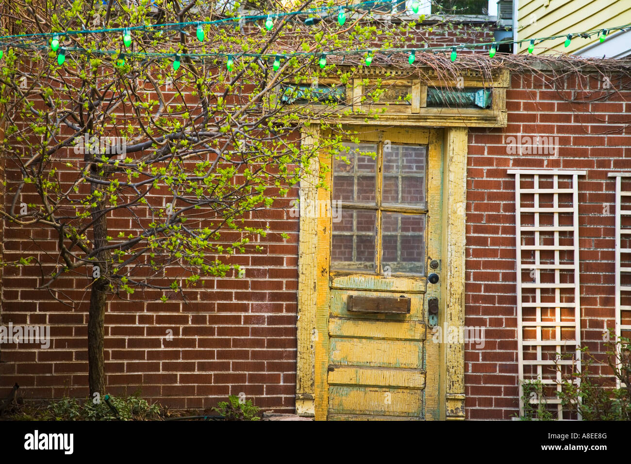 CHICAGO Illinois Faded Yellow Wooden Door Red Brick Wall Garden Trellis Old  Town Triangle Neighborhood
