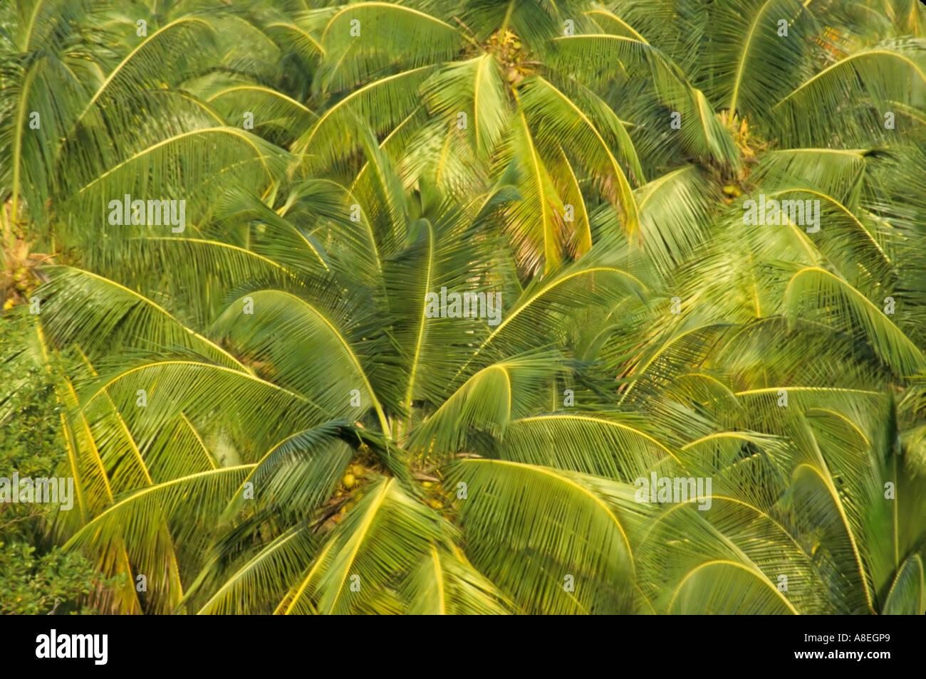 The Palmes St George Island