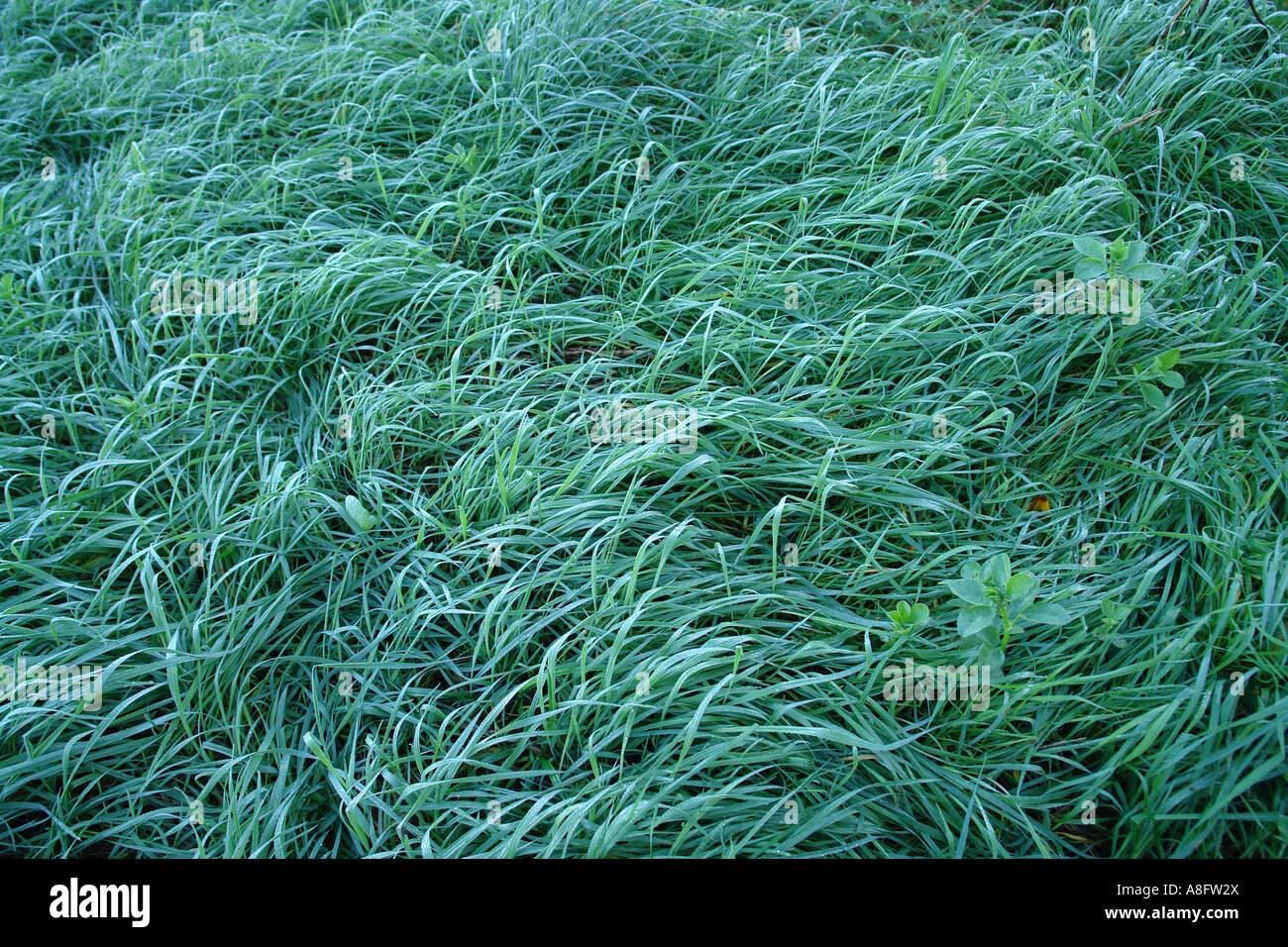 Green grassland in morning moisture - Stock Image