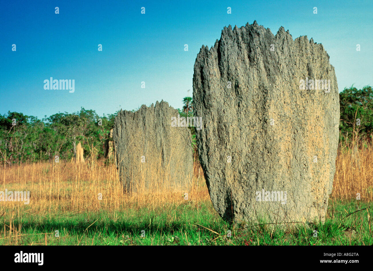 Magnetic Termite Mounds, Litchfield Nationapark, Northern Territory, Australia - Stock Image