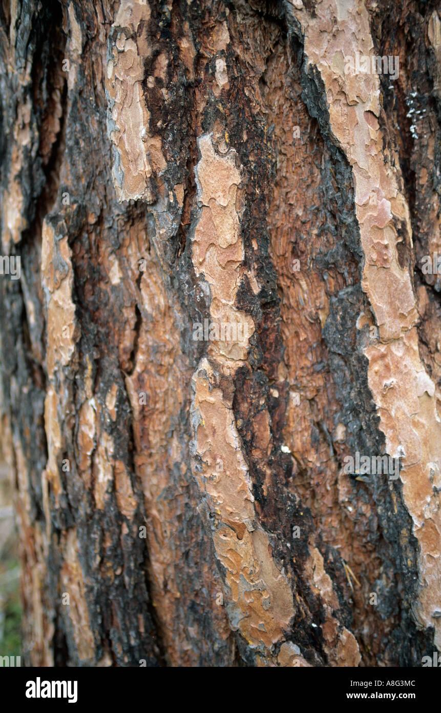 treebark Baumrinde - Stock Image