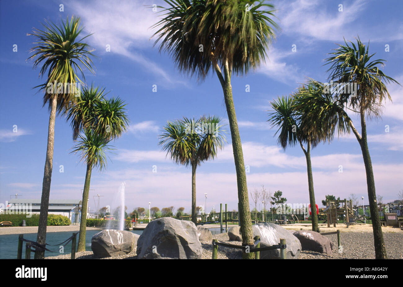 Palm trees in Agnew Park on the seafront Stranraer Scotland UK - Stock Image