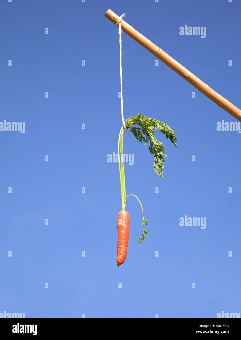 Carrot and stick. - Stock Image