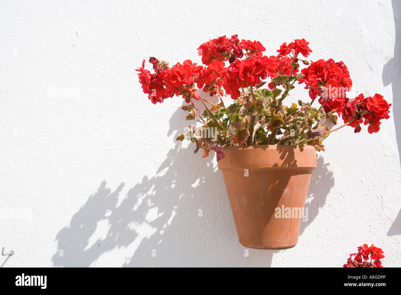 Typical flower pot hanging on andalusian wall tarifa cadiz spain typical flower pot hanging on andalusian wall tarifa cadiz spain izmirmasajfo
