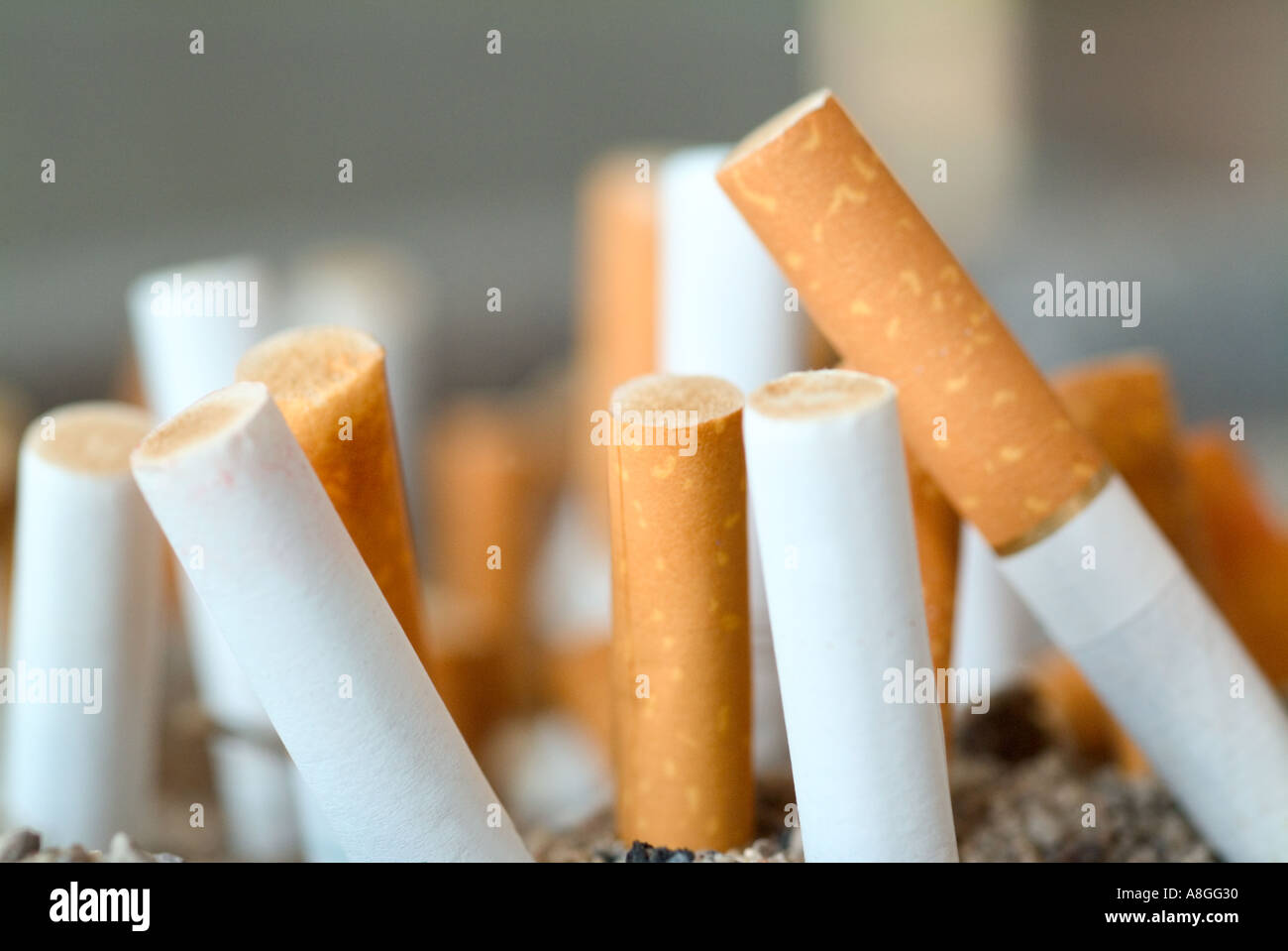 Cigarette butts - Stock Image