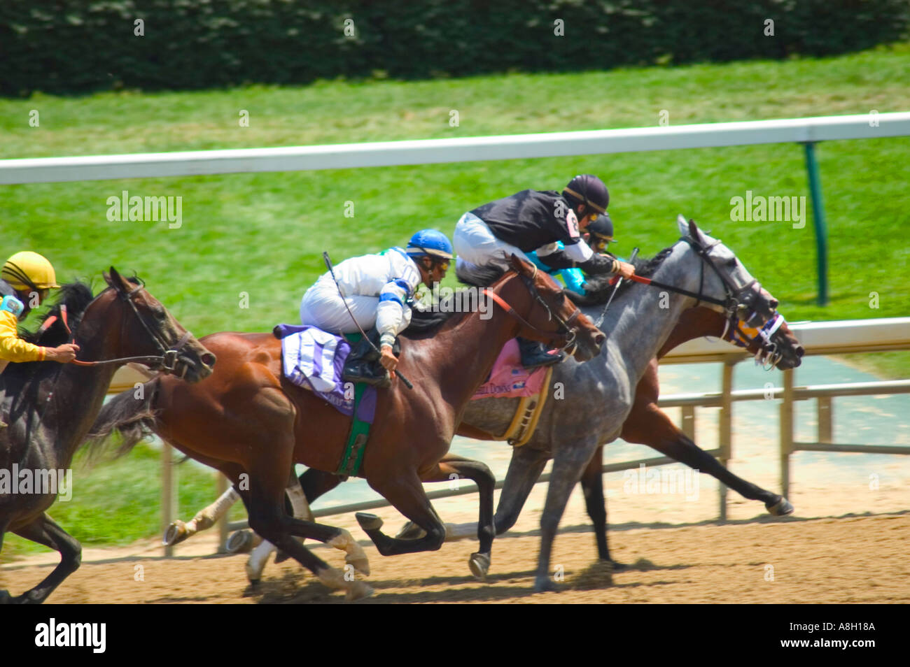 Thoroughbred race horses sprinting for the finish line down the home stretch during race at Churchill Downs in Louisville KY - Stock Image
