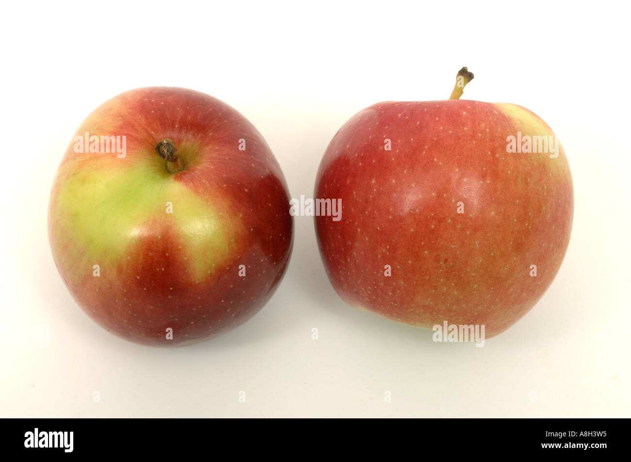 Empire apples supermarket bought and in normal shop condition - Stock Image