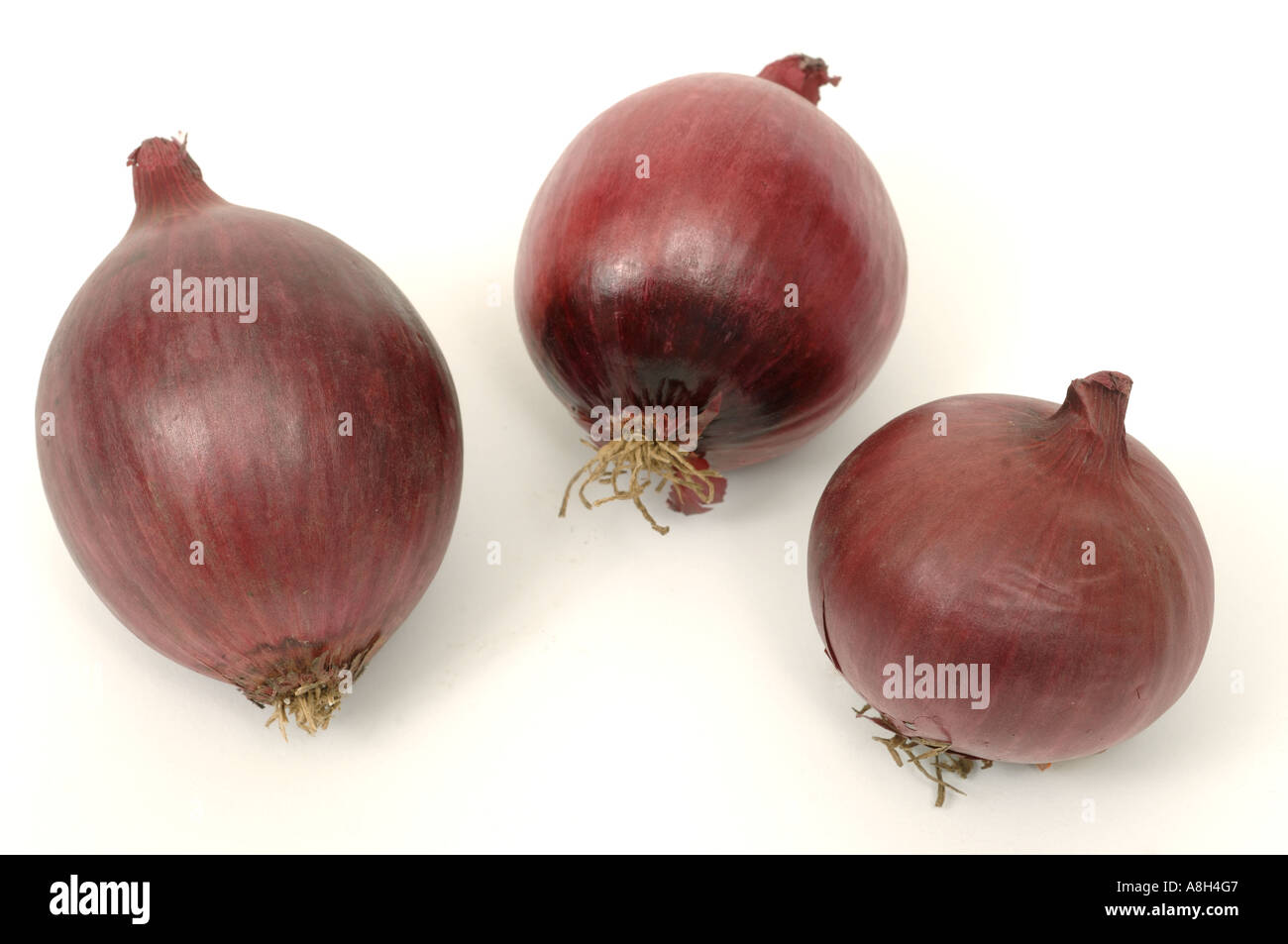 Root vegetable produce typical supermarket bought red Spanish onions - Stock Image