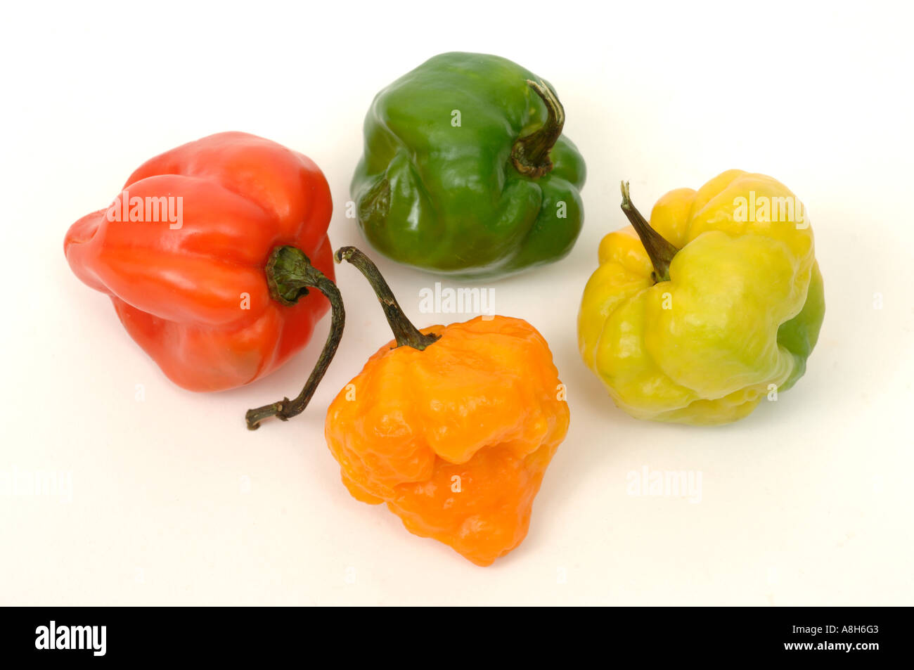 Vegetable produce typical supermarket bought Scotch bonnet chilli peppers Stock Photo