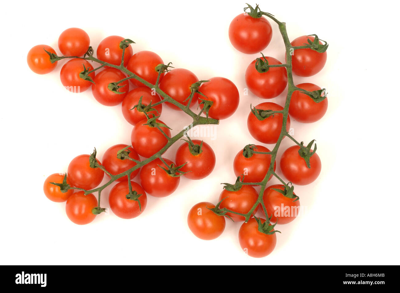 Vegetable produce typical supermarket bought tomatoes on the vine - Stock Image