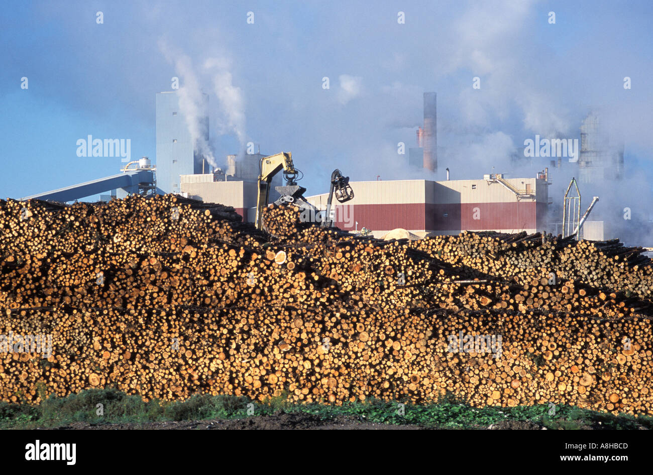 term paper mill canada Founded in 1964, cascades produces, converts and markets packaging and tissue products that are composed mainly of recycled fibres.
