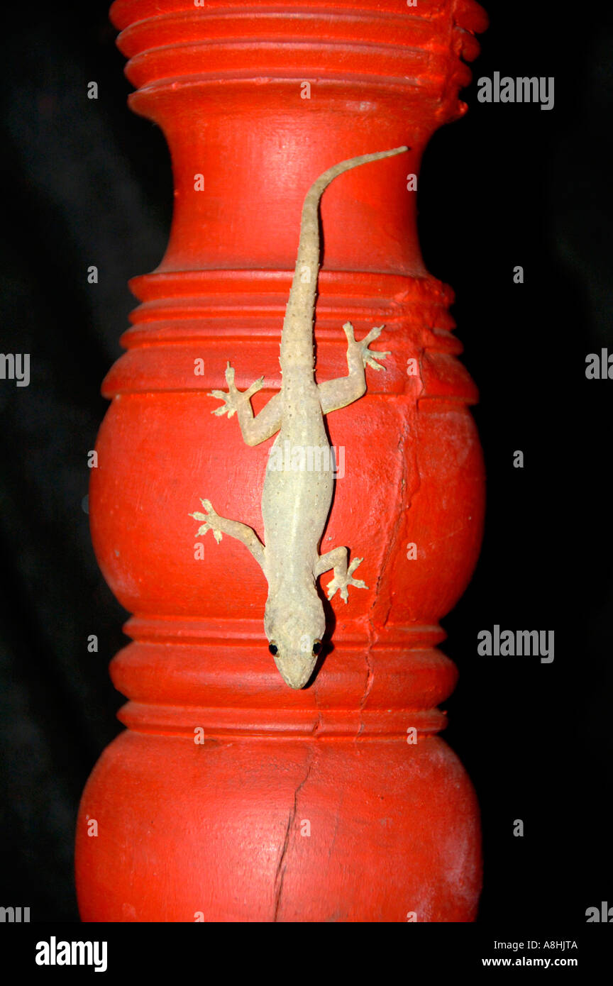 Lizard on red turned wood Luang Prabang Laos - Stock Image