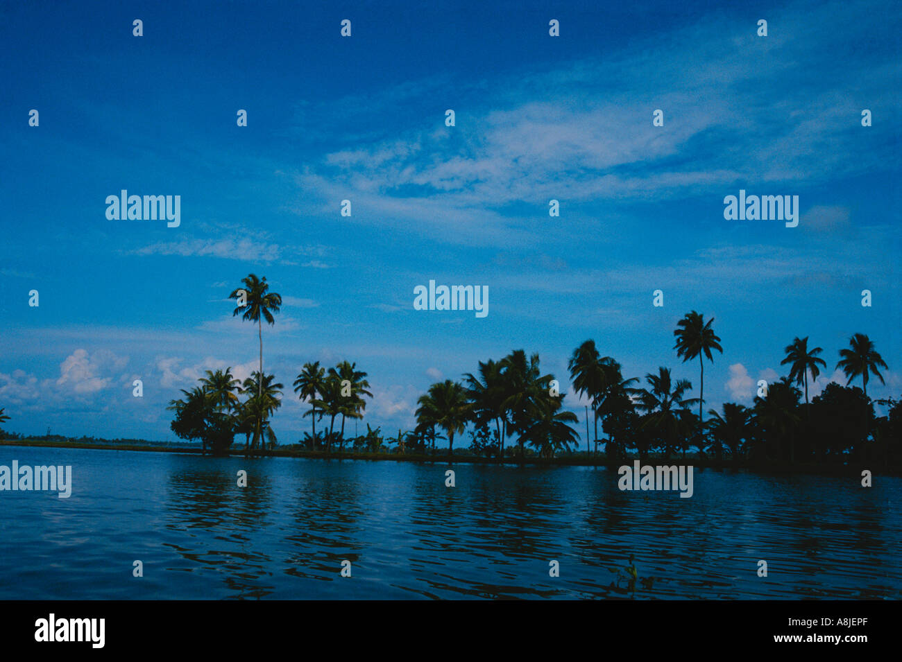 Palm trees by river side dusk, Alappuzha Backwater, South Kerala - Stock Image