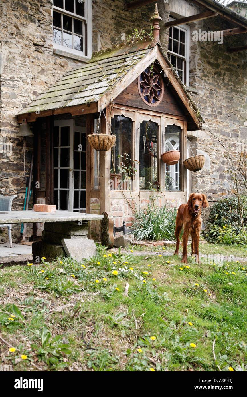 Dog Outside The Mansion Kitchen At Dolwilym Country House Carmathanshire Wales Britain UK Europe - Stock Image