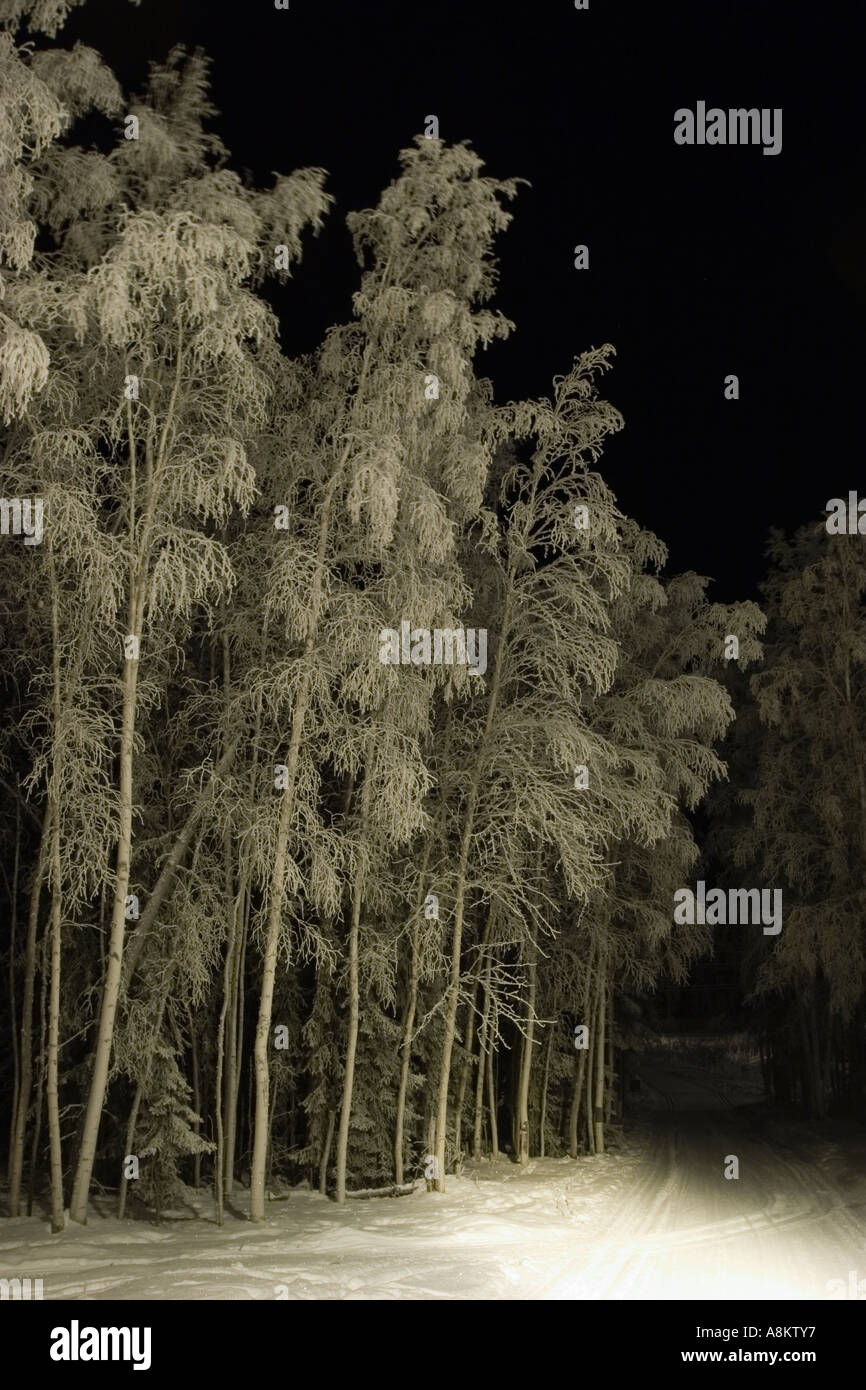 Cold night in a forest where ski trails live - Stock Image