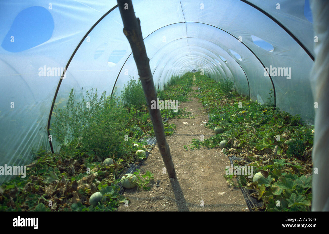 Inside a Greenhouse for Vegetables Sicily Italy Stock Photo