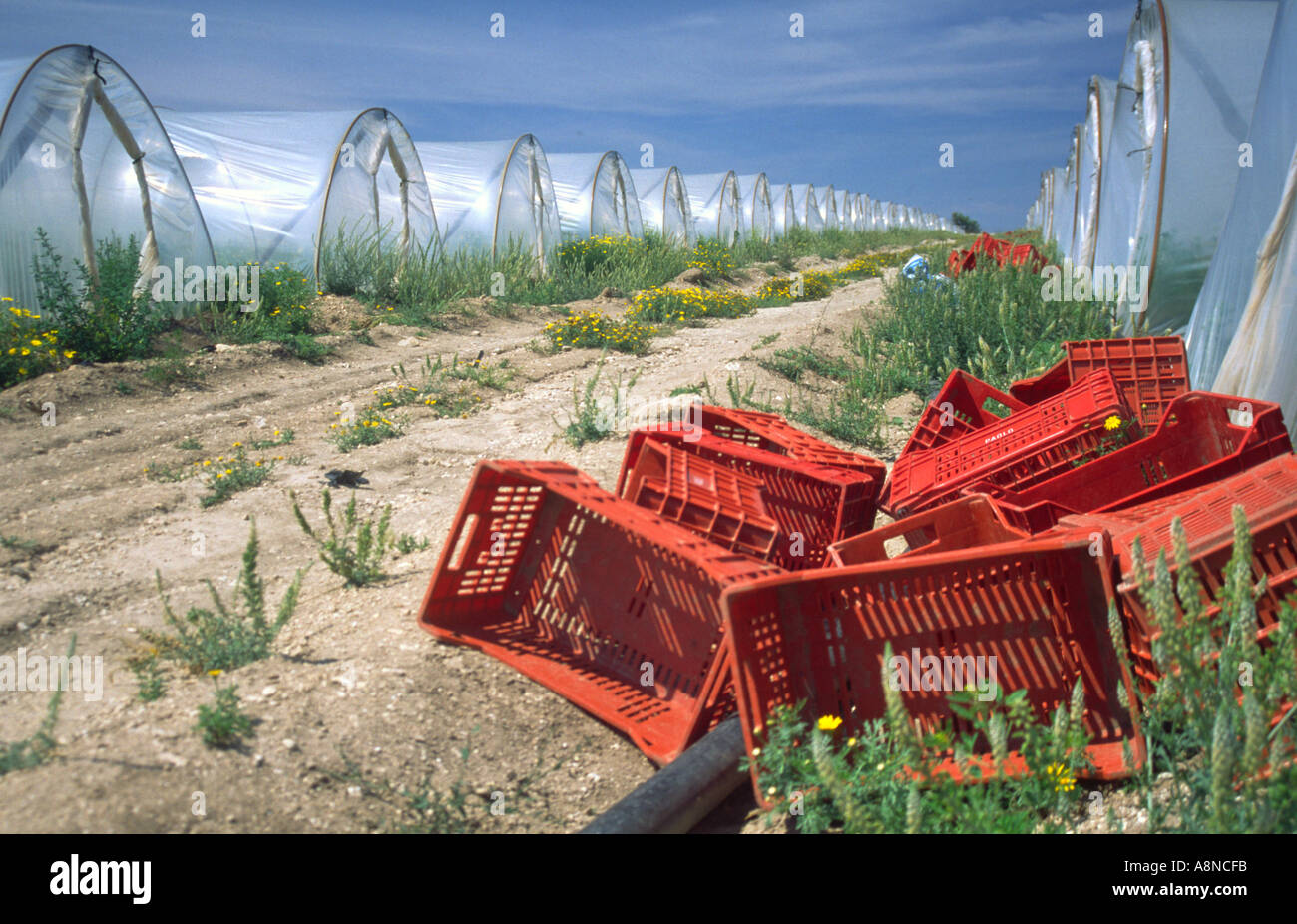Lines of Greenhouses for Vegetables Sicily Italy Stock Photo